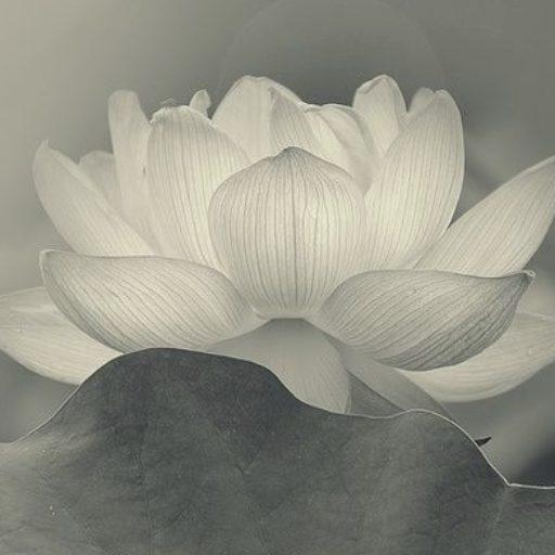 White Lotus Divine Healing